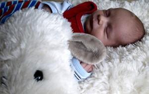 Piet und das Kuschel-Schaf.