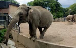 Elefant im Krefelder Zoo