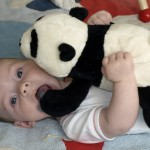 Piet kämpft mit dem Panda.