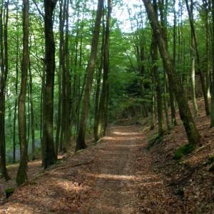Schöne Wege, auch durch den Wald.