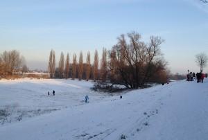 Rodeln an den Rheinauen
