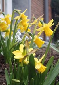 Der Vorgarten freut sich auf den Frühling