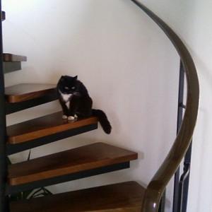 Nachbars Katze schaut sich alles an.