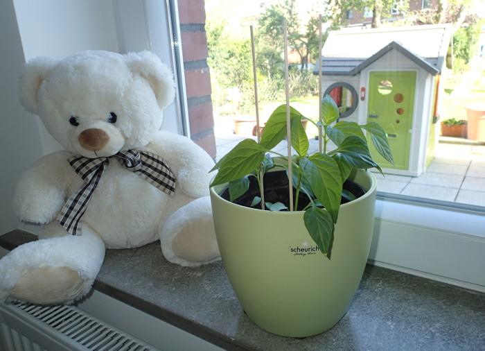 Pflanzen im  Kinderzimmer