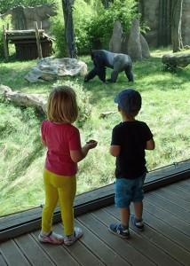 Papa- oder Mama-Gorilla?