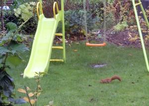 """Der """"Fuchs"""" im Garten."""