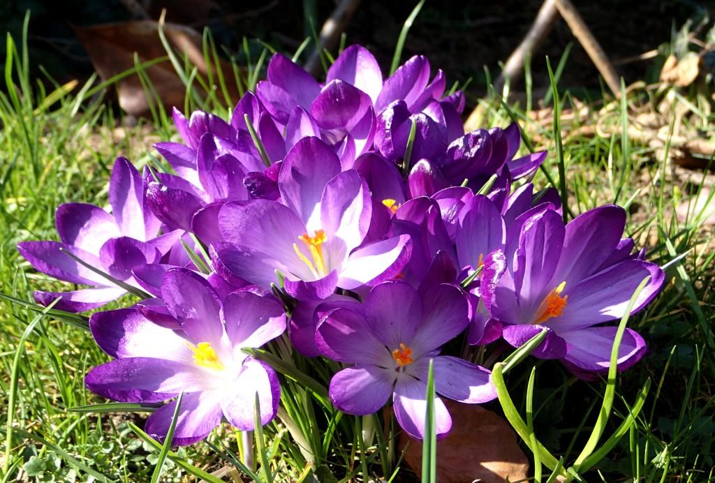 Der Garten erwacht zum Leben