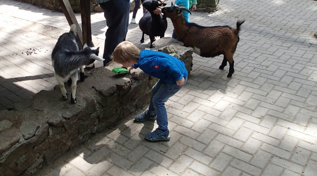 Der Streichelzoo im Wildpark Frankenhof