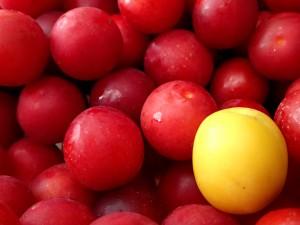 Kirschpflaumen und eine Mirabelle
