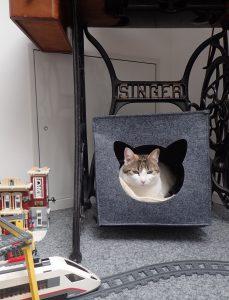Die Katze bewacht den Zugang zur Abseite, sie weiß, dass der Marder da ist.