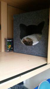 Die Katzenhöhle im Fernsehschrank im Wohnwagen