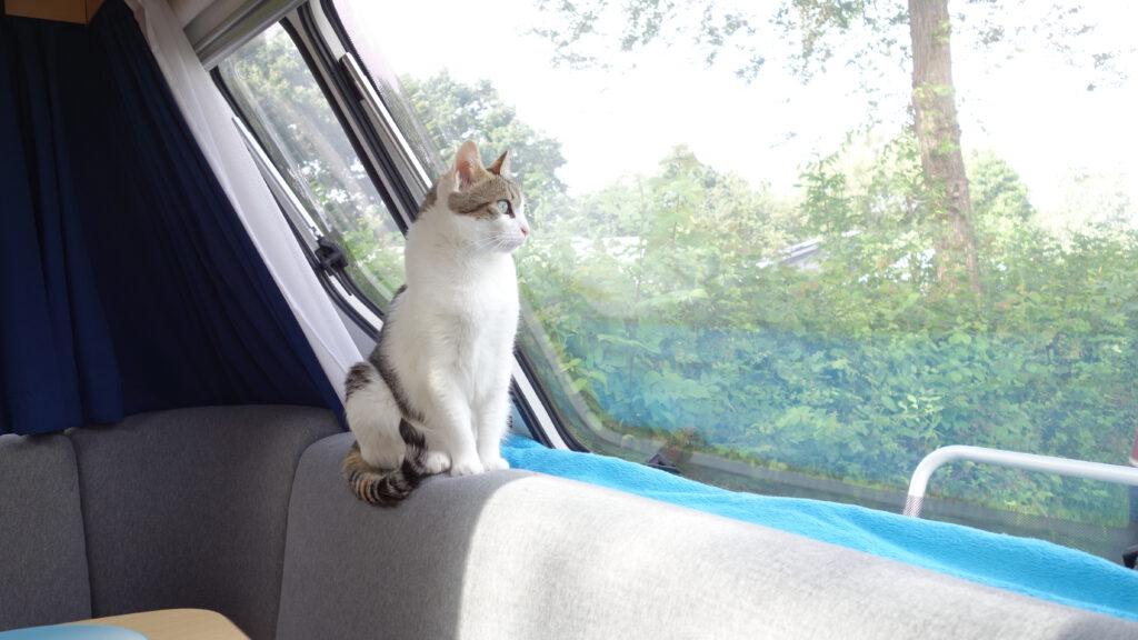 Die Katze genießt den Ausblick aus dem großem Bugfenster im Wohnwagen